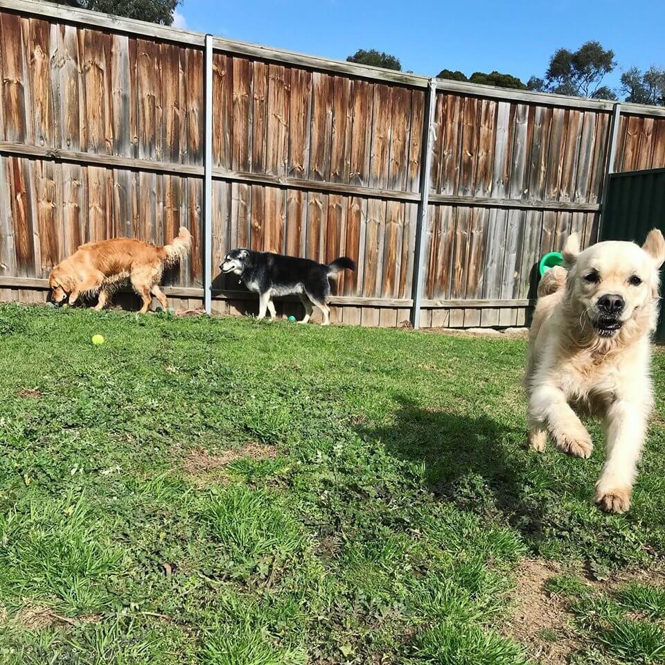 https://sydneydogandcatboarding.com.au/wp-content/uploads/2019/10/Slider-21.jpg