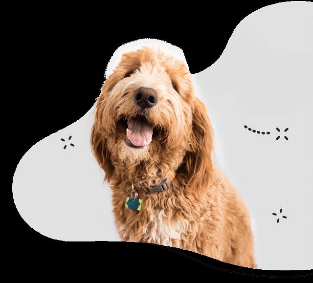 https://sydneydogandcatboarding.com.au/wp-content/uploads/dogs.png